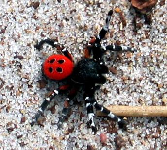 Une periode pour les araign es velo vert le vtt tout le vtt - Araignee rouge dangereux pour l homme ...
