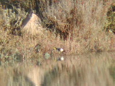 Oiseaux identification par la couleur des oeufs vert de for Taille des abricotiers bergeron